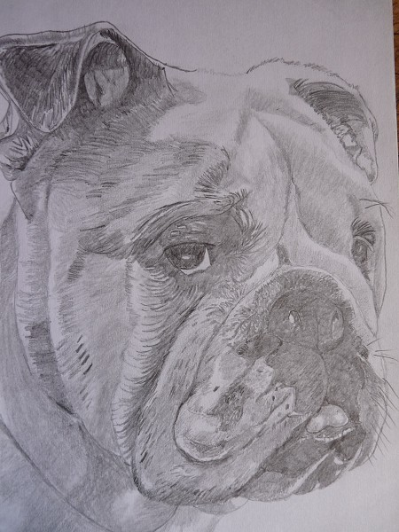 bulldog drawing print